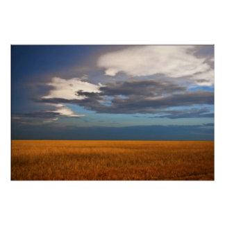 Wheat Field Fine Oil Painting Poster