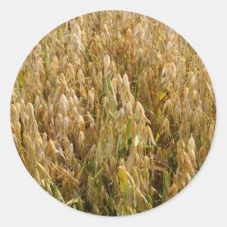 Wheat Field in Spring Sticker