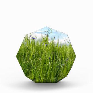 Wheat field in spring / Weizenfeld Award