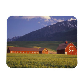 Wheat field in the Wallowa Valley, Just outside Magnet