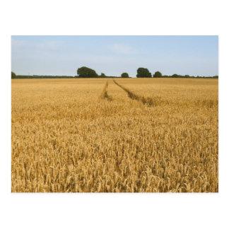 Wheat field | Landscape Postcard