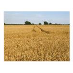 Wheat field | Landscape Postcards