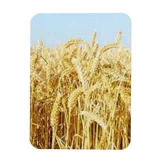 Wheat Field Magnet