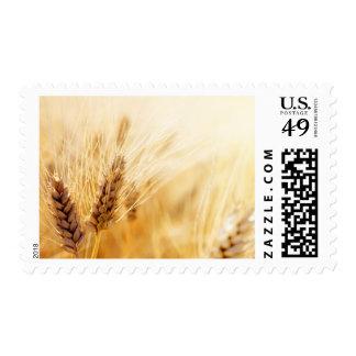 Wheat field postage