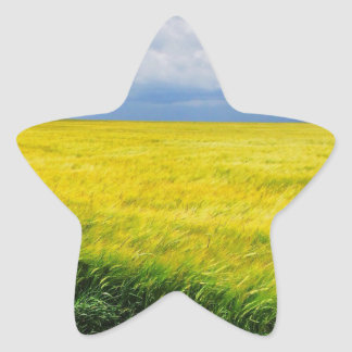 Wheat field star sticker