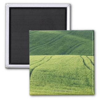 Wheat Field with Tire Tracks, Pienza, Val Magnet