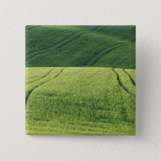 Wheat Field with Tire Tracks, Pienza, Val Pinback Button