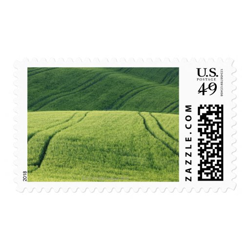 Wheat Field with Tire Tracks, Pienza, Val Postage