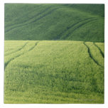 Wheat Field with Tire Tracks, Pienza, Val Tiles