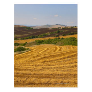 Wheat fields after harvest postcard