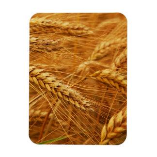 Wheat Magnet