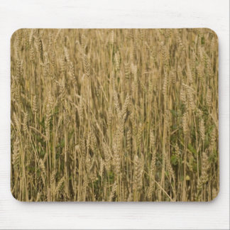 wheat mousepads