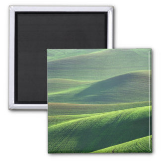 Wheat springs up in the hills of the Palouse Refrigerator Magnets