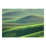 Wheat springs up in the hills of the Palouse Photo Print
