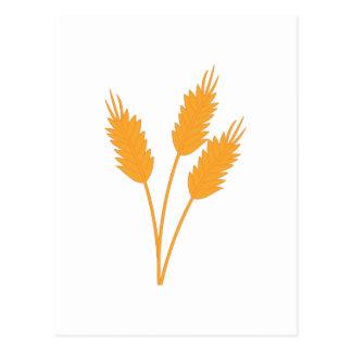 Wheat Stalk Postcard