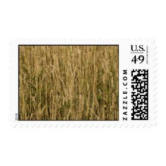 wheat stamp