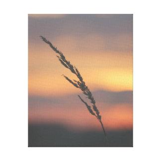 Wheat Sunrise Stretched Canvas Print