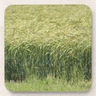 Wheat - Tasty! Coasters