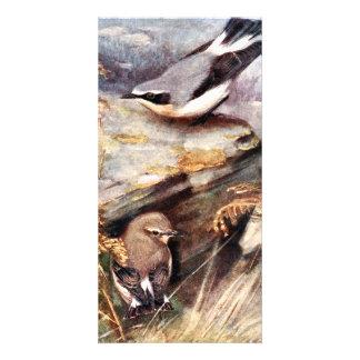 Wheatear Birds Painting Custom Photo Card