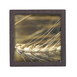 wheatear cajas de recuerdo de calidad