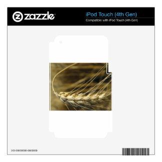 wheatear calcomanía para iPod touch 4G