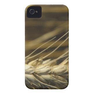 wheatear Case-Mate iPhone 4 carcasa