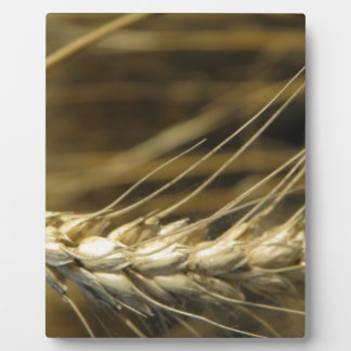wheatear placa de plastico