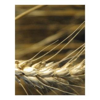 wheatear plantillas de membrete