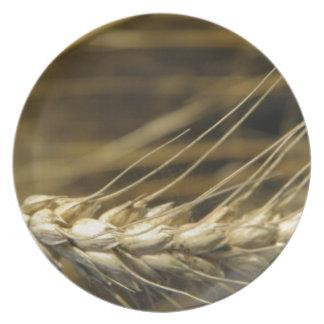 wheatear plato de comida