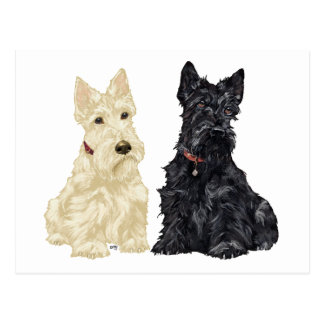 Wheaten and Black Scottish Terriers Postcard