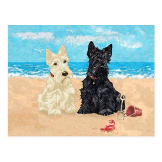 Wheaten & Black Scotties at the Beach Postcard