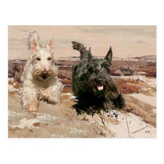 Wheaten & Black Scotties Running Postcard