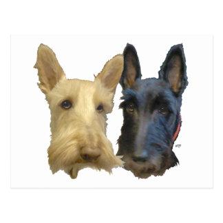 Wheaten & Black Scottish Terriers Postcard