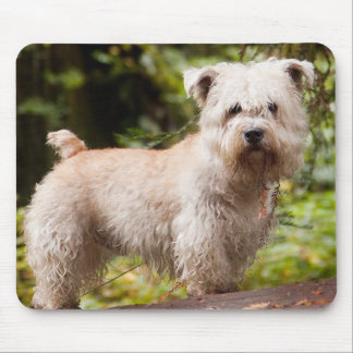 Wheaten_glen_of_imaal full.png mouse pad
