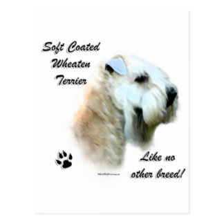 Wheaten Like No Other Breed Postcard