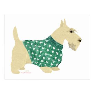 Wheaten Scottish Terrier Sweater Postcards