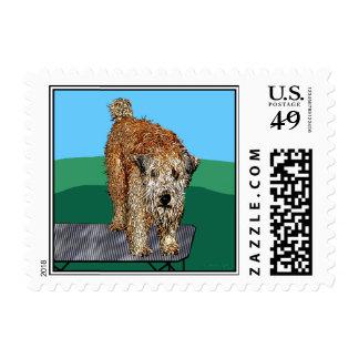 """Wheaten Terrier Art:  """"Unhappy Camper"""" Postage Stamp"""