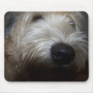 Wheaten Terrier Dog Face Mouse Pads