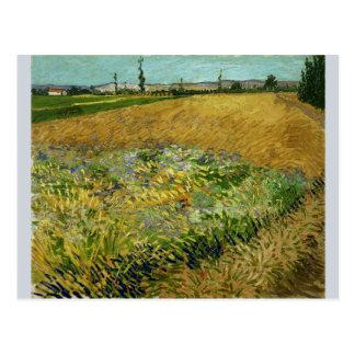 Wheatfield de Vincent van Gogh Postales