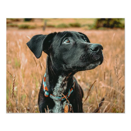 Wheatfield Dog // Stunning Rusty Blues