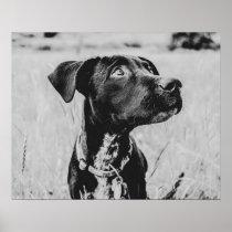 Wheatfield Dog // Such Amazing Eyes