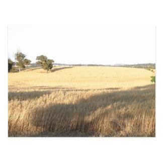 Wheatfield en la granja de Williams en Australia o Tarjetas Postales