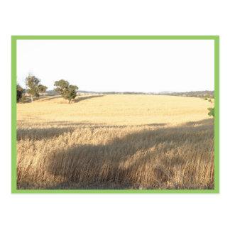 Wheatfield en la granja de Williams en Australia o Tarjeta Postal