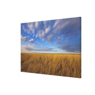 Wheatgrass and dramatic skies at Freezeout Lake Canvas Print