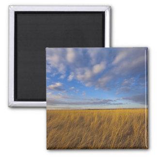Wheatgrass and dramatic skies at Freezeout Lake Refrigerator Magnets