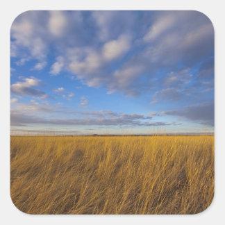 Wheatgrass and dramatic skies at Freezeout Lake Square Sticker