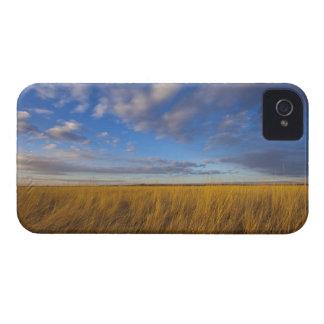 Wheatgrass y cielos dramáticos en el lago funda para iPhone 4 de Case-Mate