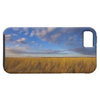 Wheatgrass y cielos dramáticos en el lago funda para iPhone SE/5/5s