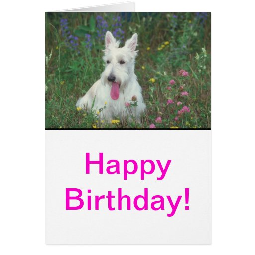 Wheaton Scottish Terrier Greeting Card