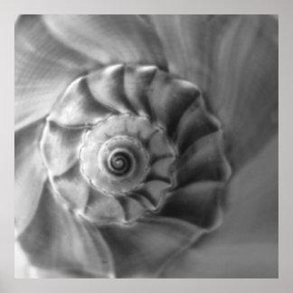 Whelk Print